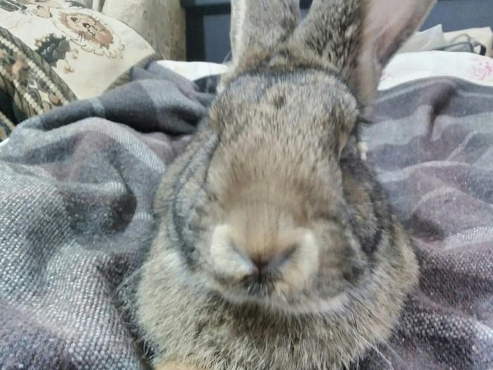 Эти милые домашние животные Кролик, Домашние животные, Длиннопост