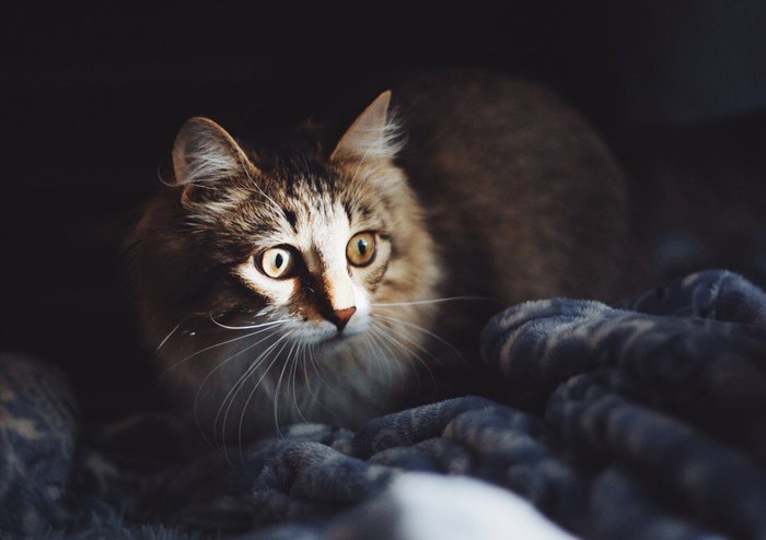 А почему бы и да Приют для животных, Фотограф волонтер, Волонтерство, Помощь животным, Собака, Кот, Длиннопост