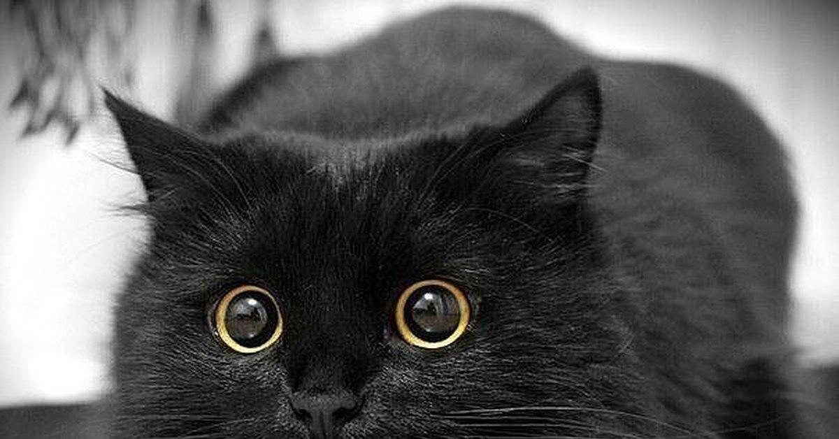 Смотреть картинки черной кошки