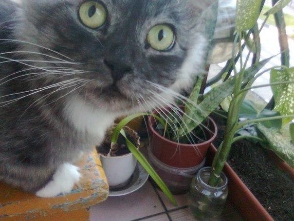 История кота Лёлика, который никогда не сдавался