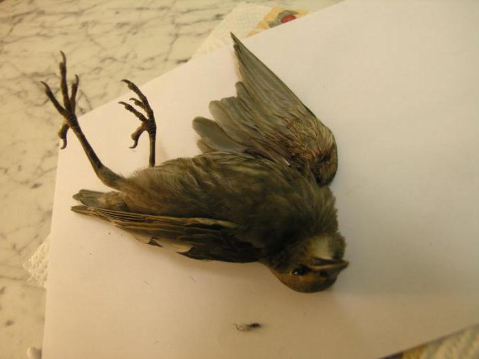Товарищи верующие, прекратите массовое убийство птиц! Птицы, Голубь, Религия, Смерть, Мертвые, Обычаи, Без рейтинга