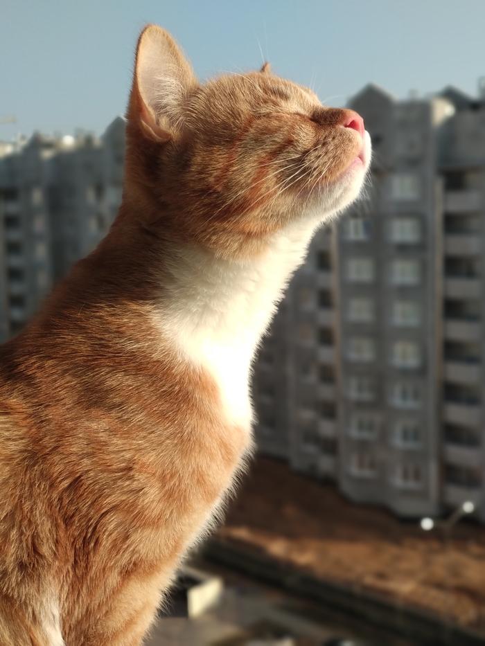 Запах весны Кот, Рыжий, Пиво, Весна