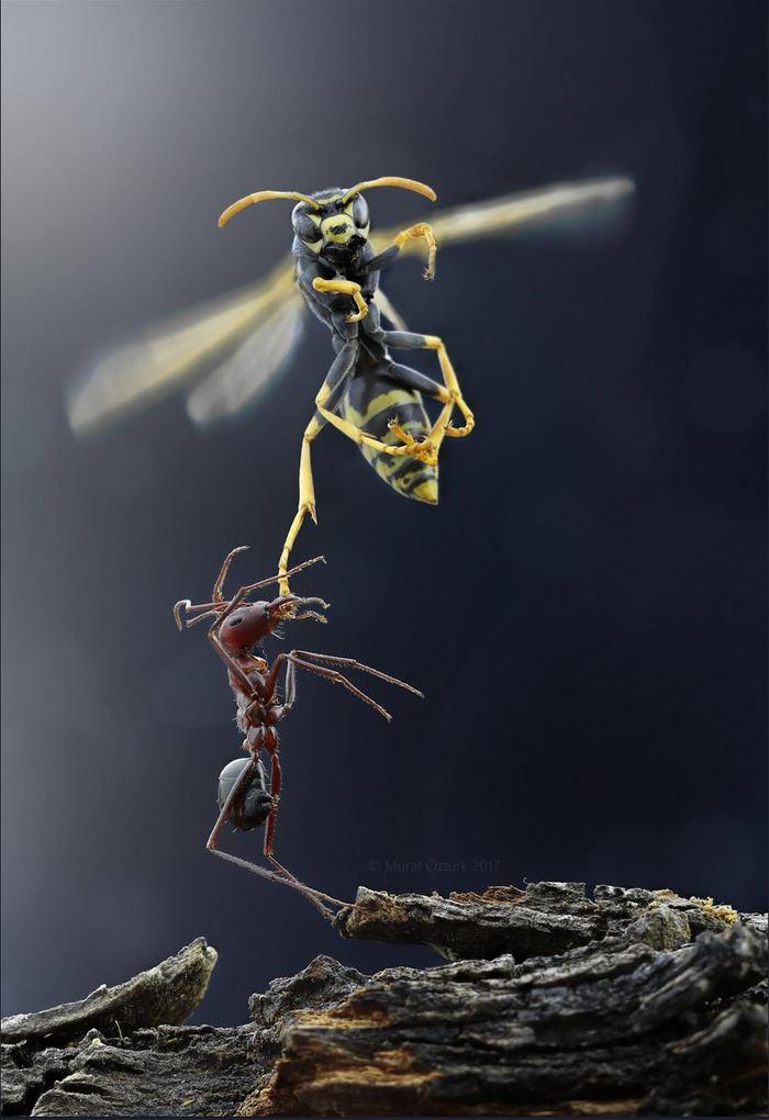 Оса и муравей