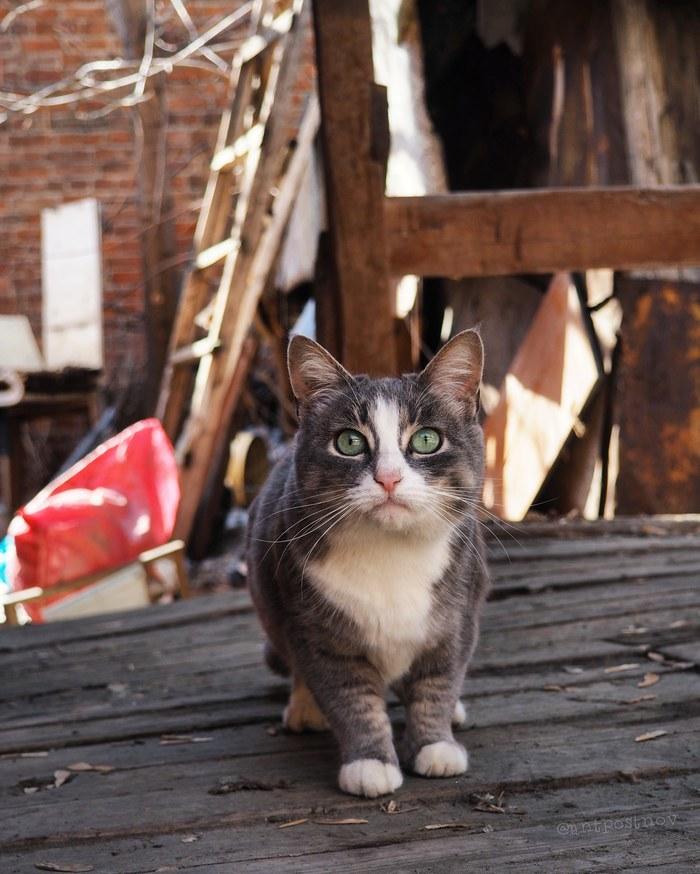 Его Величество Кот, Весна