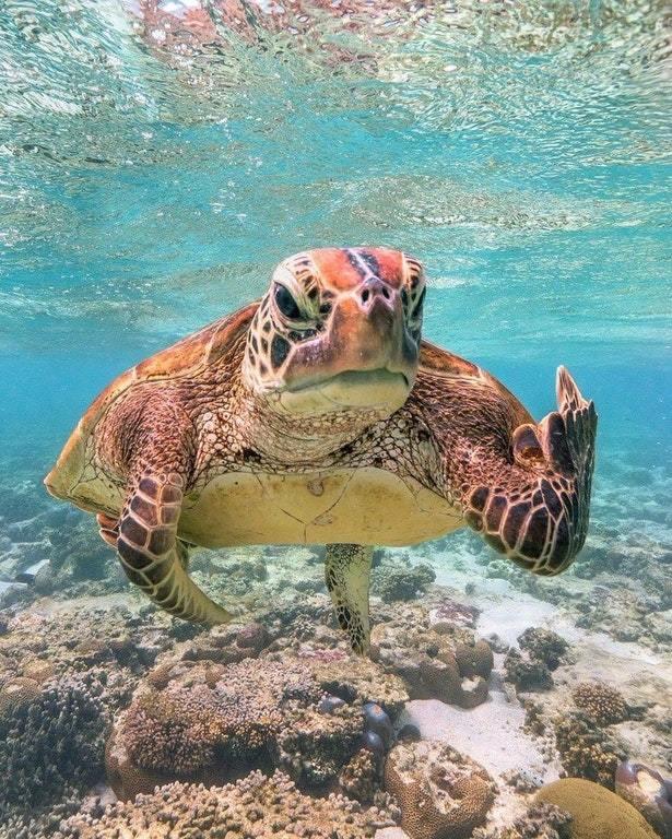 Мистер черепаха не рад тебе!