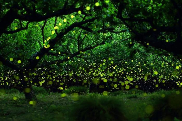 Мерцающий парк светлячков в Малайзии Светлячок, Малайзия, Удивительное, Красивое, Фотография, Лучшее, Длиннопост