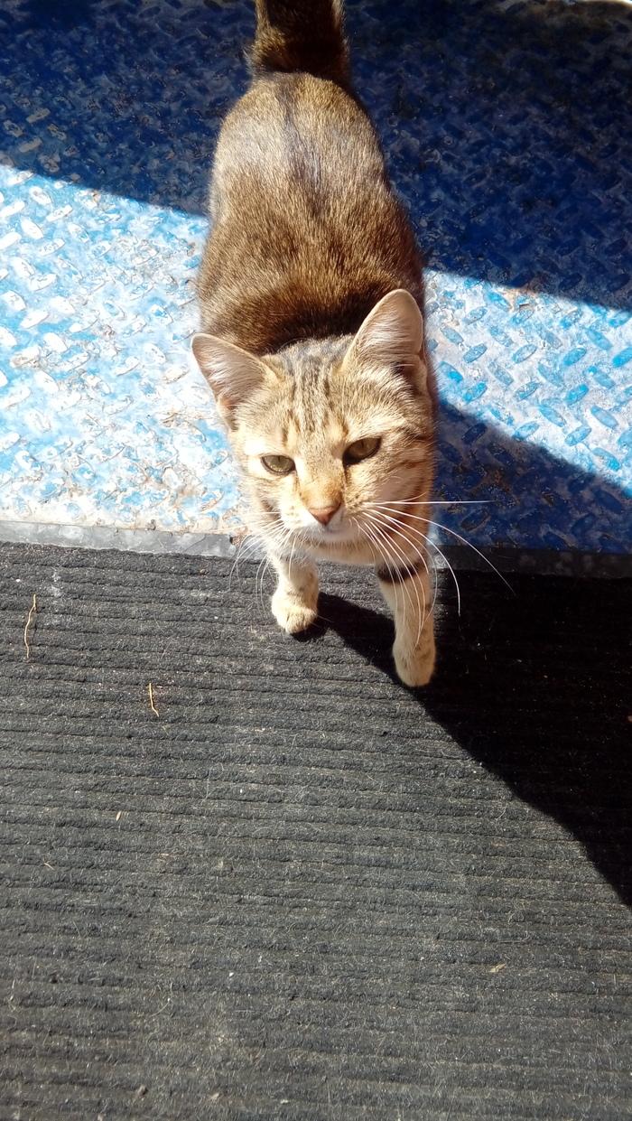 Кошка ищет дом. Севастополь Севастополь, Кот, В добрые руки