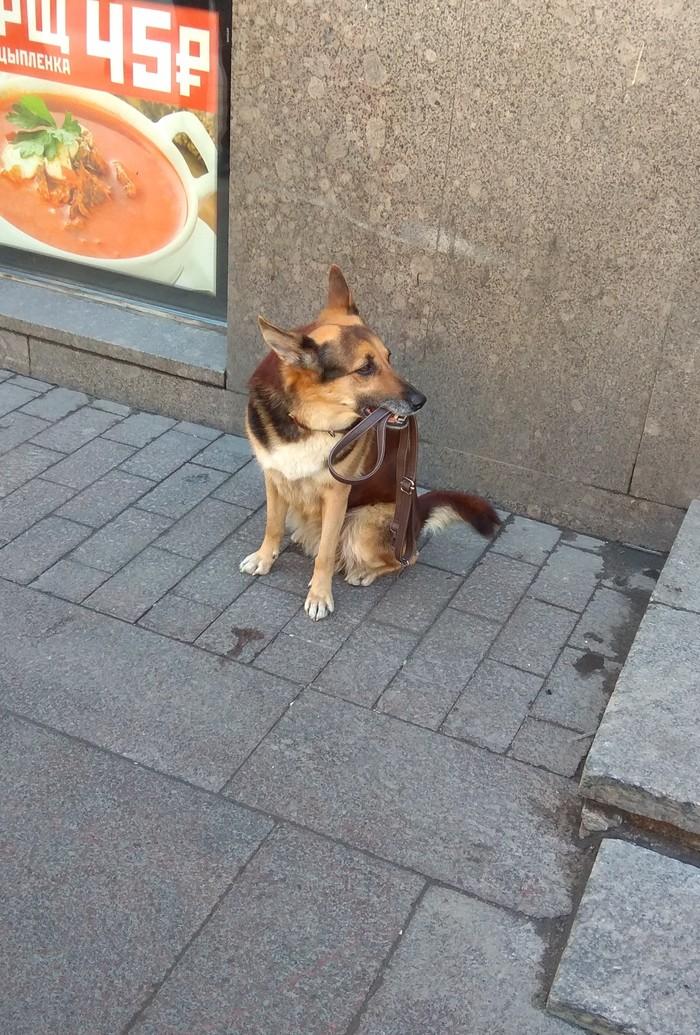 Пёсико Хатико, Славный пёсик, Собака