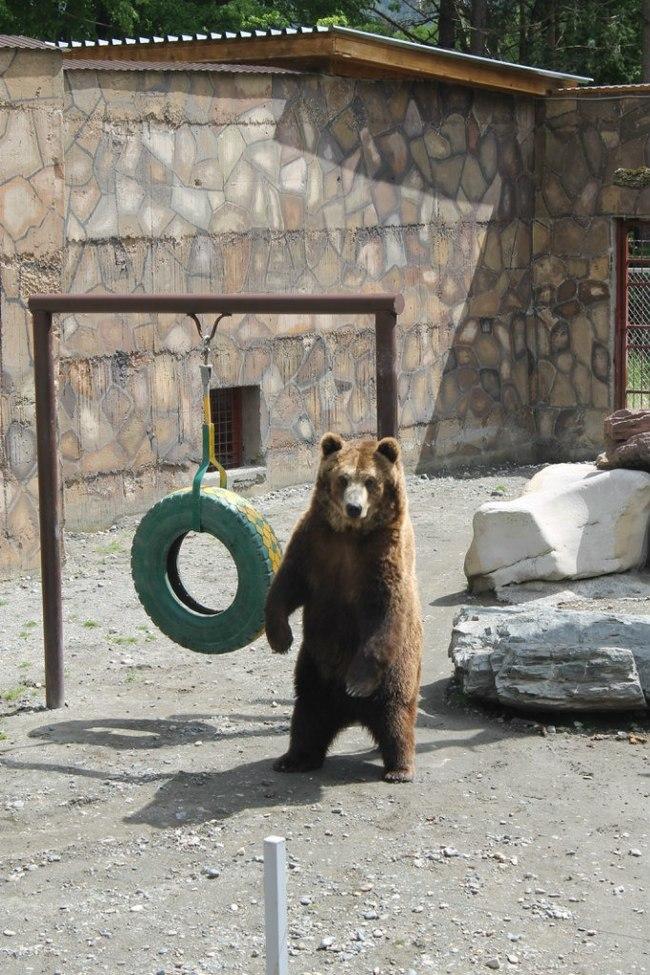 Настроение - Мишка дал бы кому-нибудь в лицо Медведь, Весеннее обострение, Животные, Животные хотят в отпуск