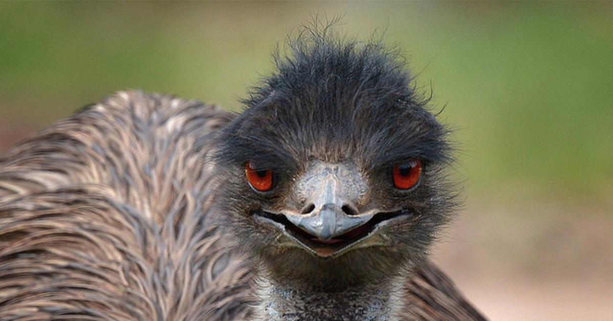 С фермы в Японии сбежали страусы эму 2