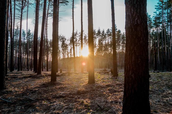 Лесная фото прогулка. Лес, Весна, Фотография, Природа, Длиннопост