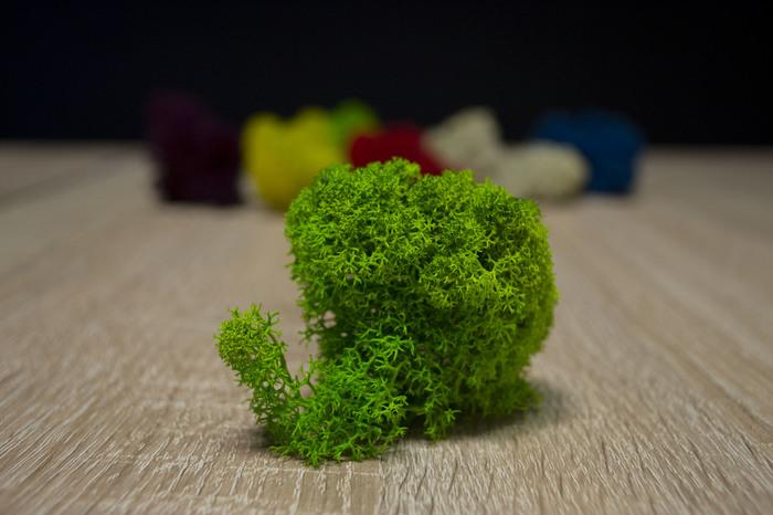 Стабилизированный мох в интерьере. Работа, Мох, Растения, Интерьер, Дизайн интерьера, Длиннопост