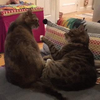 Типичные коты