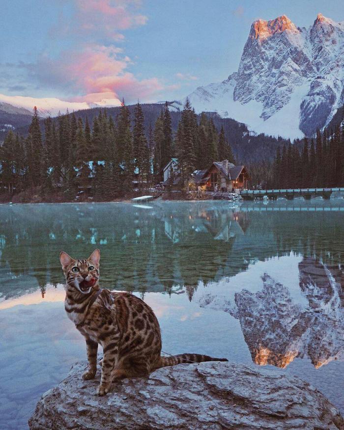 Кошка-путешественница из Канады Кот, Канада, Путешествия, Необычное, Фотография, Лучшее, Длиннопост