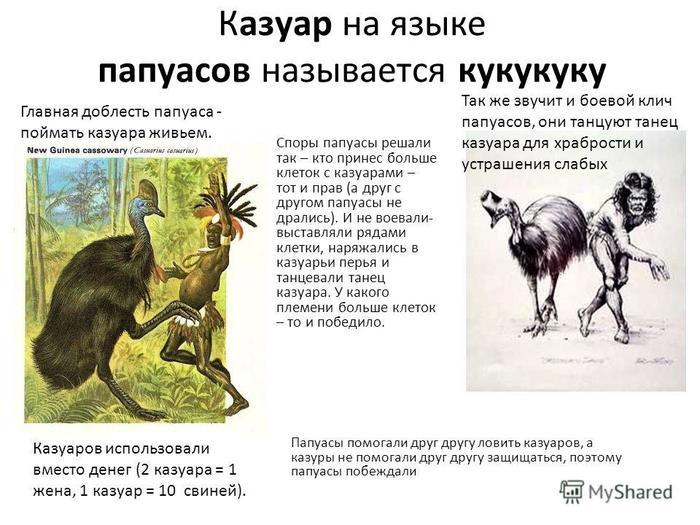 Убить одной левой казуар, птицы, Папуа-Новая Гвинея, австралия, длиннопост