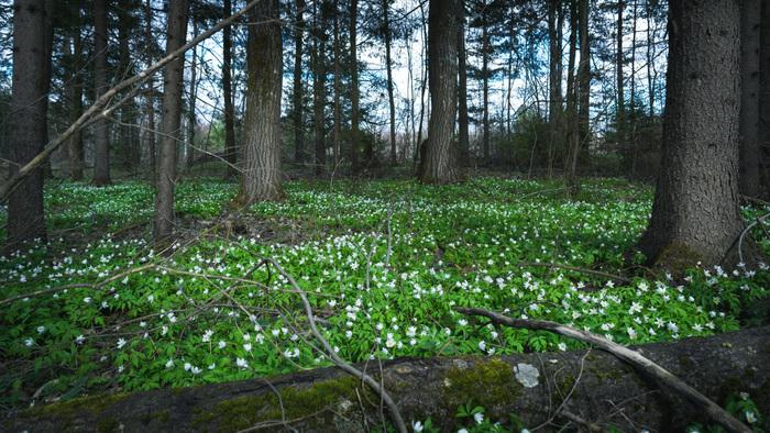 Весенне-лесная подборка Фотография, Пейзаж, Лес, Листья, Зелень, Nikon d5200, 18-55 kit, Длиннопост