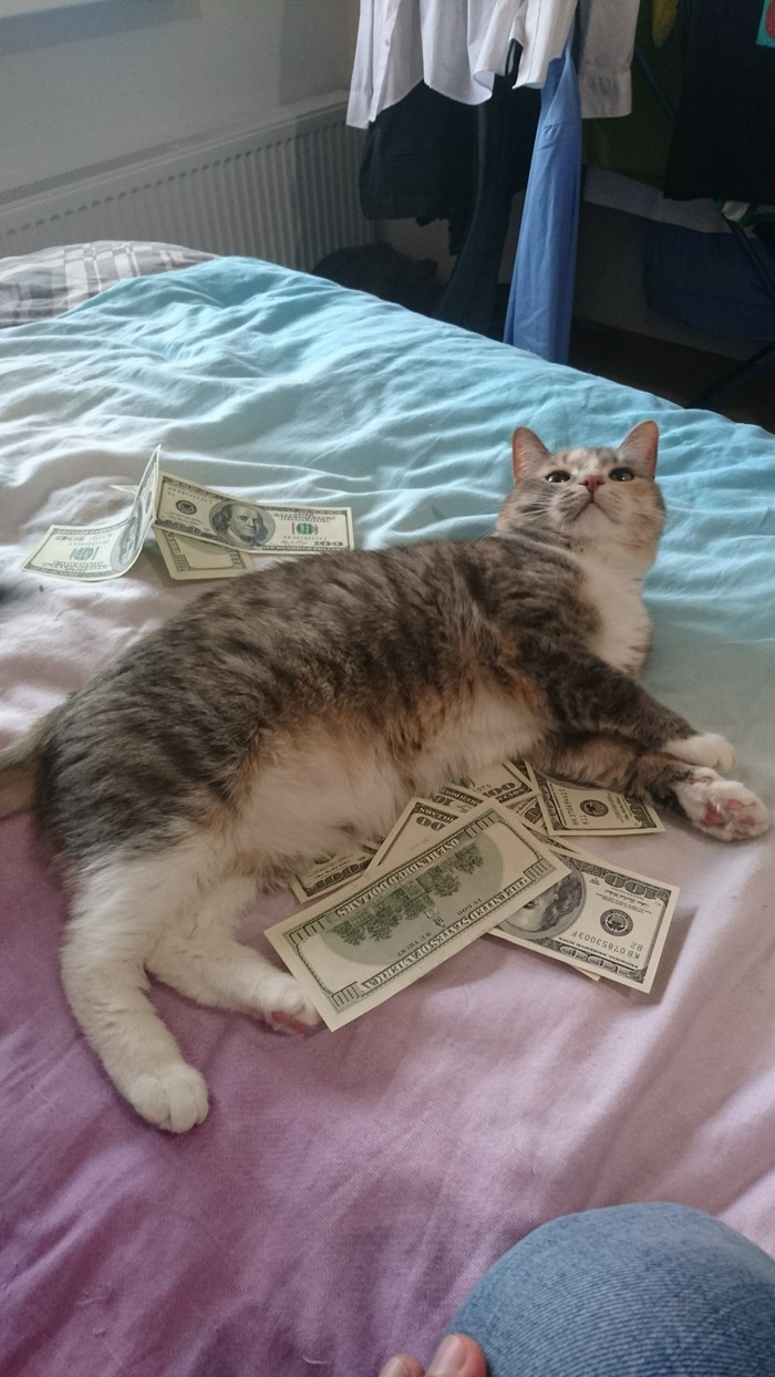 Кошка в зелени Трехцветная кошка, Кот, Длиннопост