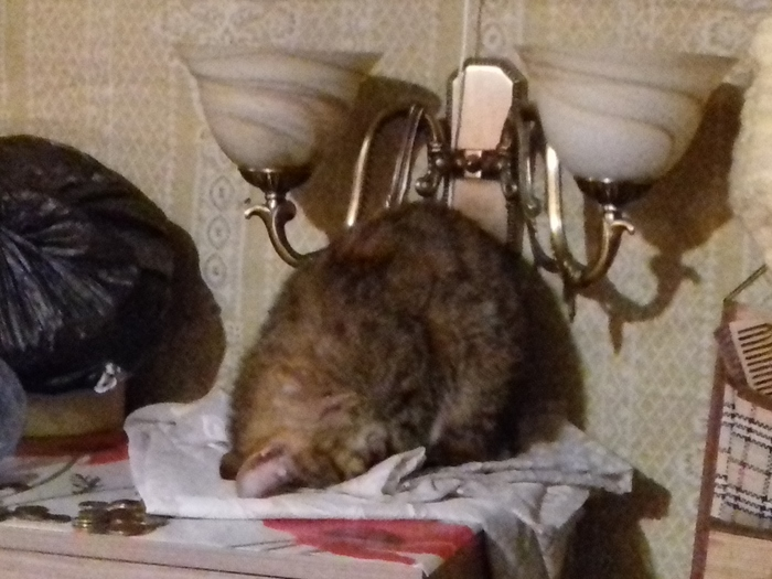 А вот моя кошка любит спать в таком положении. Котомафия, Кот