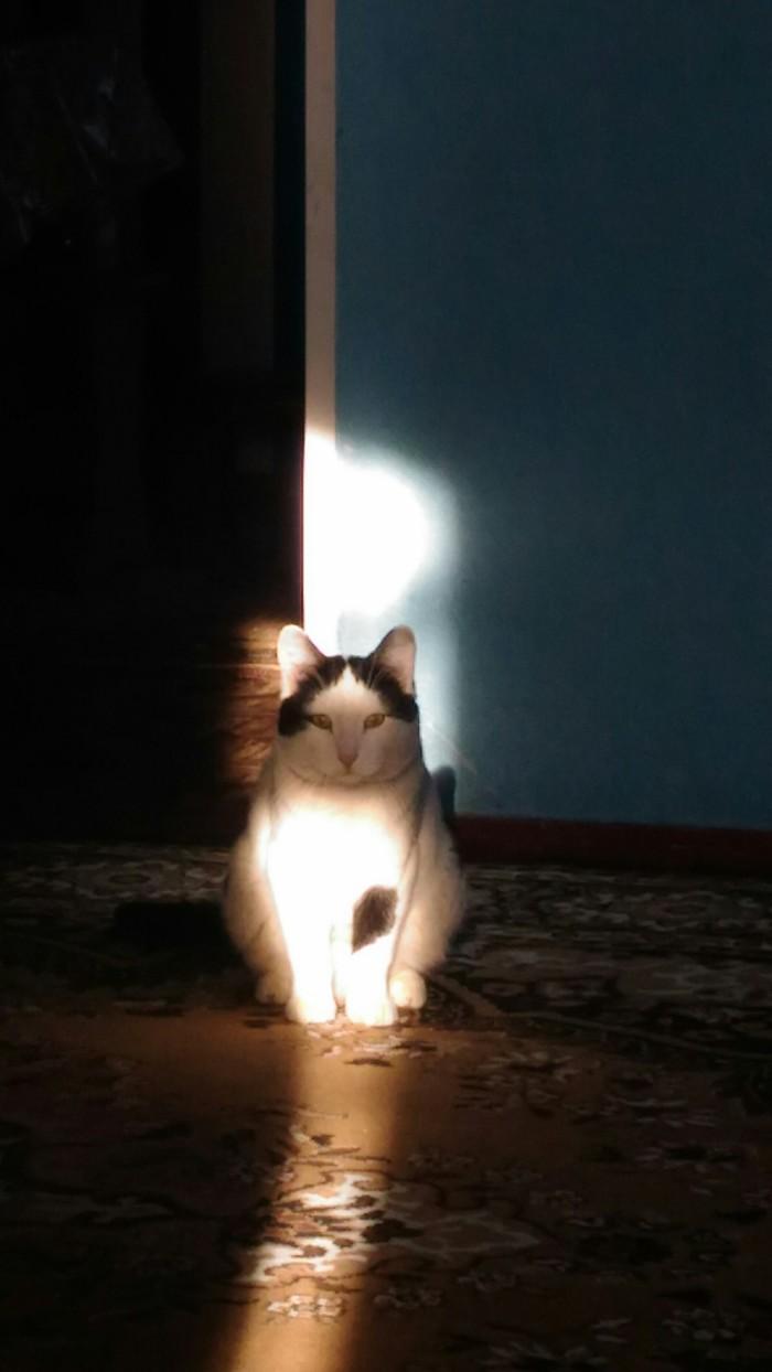 Кот земляного оттенка Грязнуля, Кот