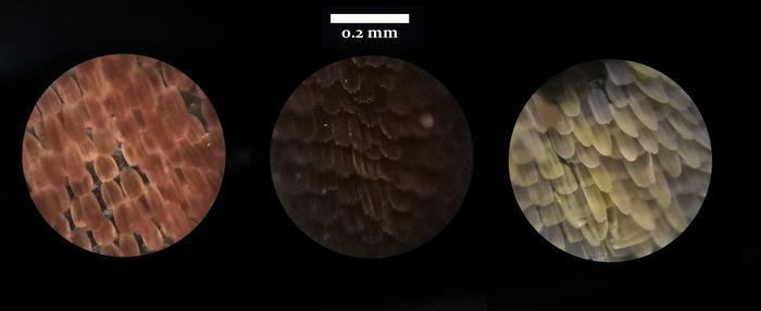 Микрофотки ч.2 Микроскоп, Паук, Насекомые, Животные, Пятничный тег моё, Длиннопост