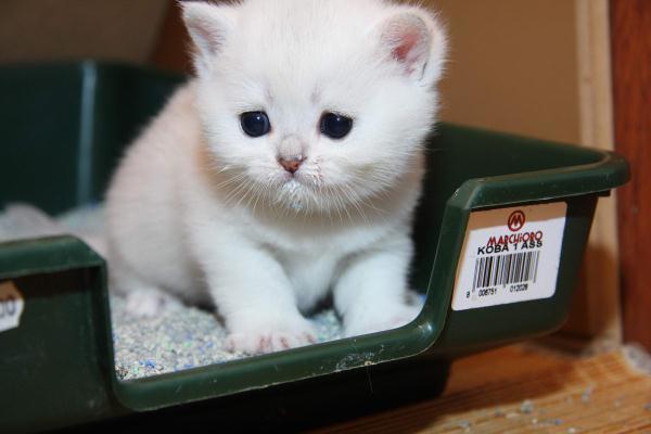 Как отучить кошку гадить. Кот, Лоток, Проблемы с туалетом, Кот гадит, Насрал в тапок, Длиннопост