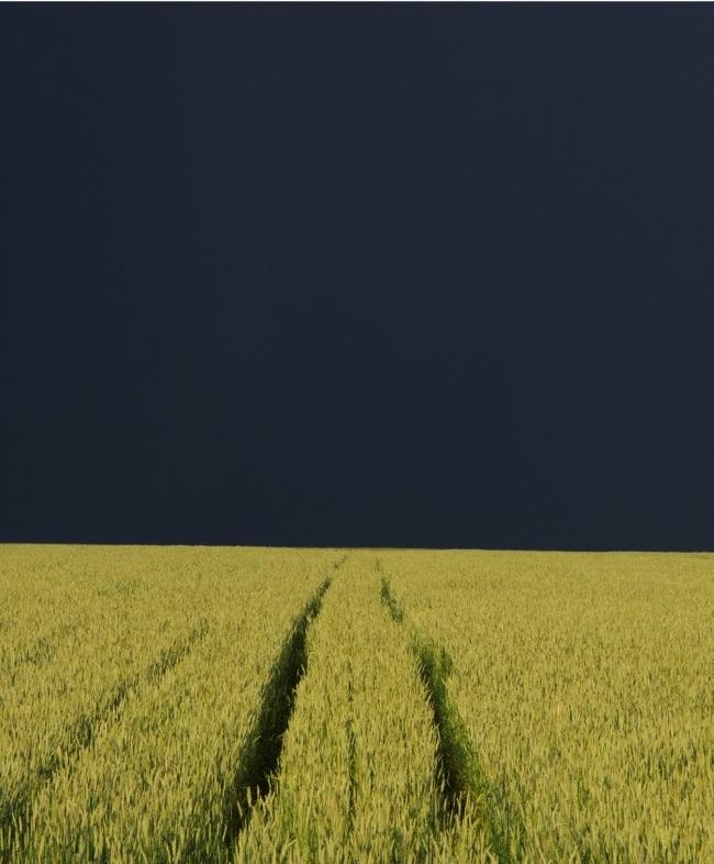Хлебное поле перед грозой