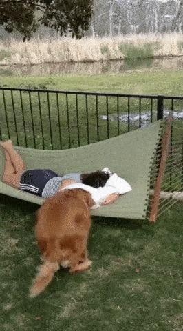Отдыхать вздумала? Иди грядки копай