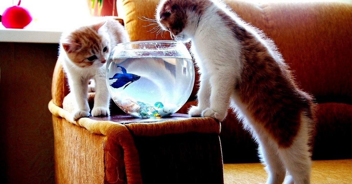 прикольные картинки любопытные коты где предложение пропущено
