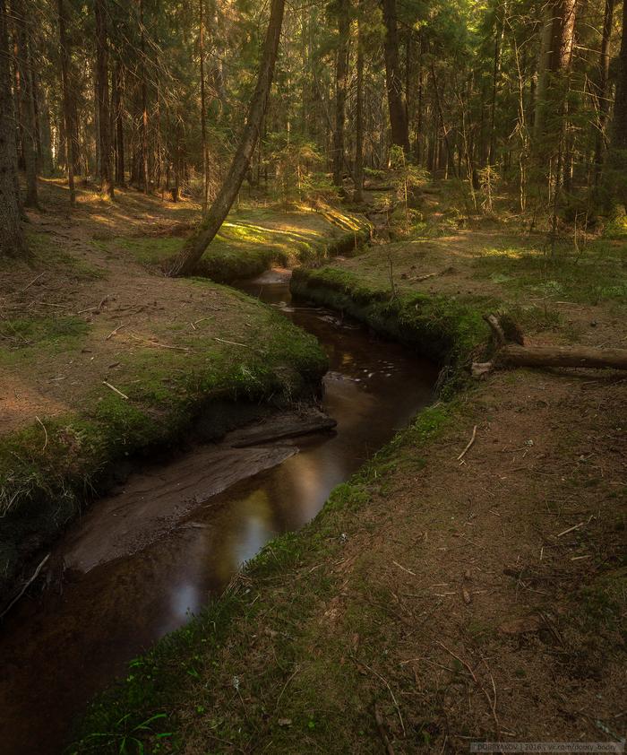 Лесной ручеек Лес, Фотография, Пейзаж, Ручей, Nikon