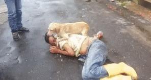 Собака охраняет своего хозяина