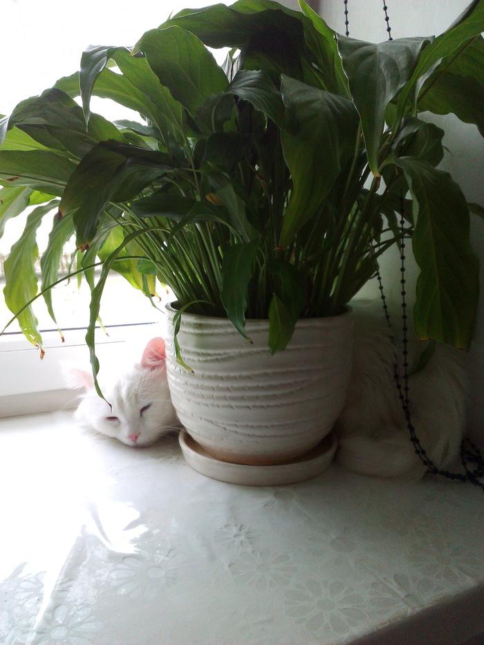 Настроение- дождливая суббота Кот, Дождь, Сплин