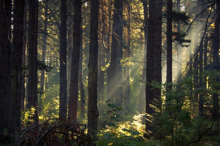 Красоты кедрового леса за Тобольском Фотография, Пейзаж, Природа, Заканчивающий фотограф