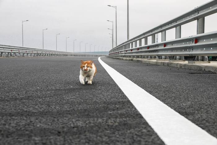 Кот Мостик проверил Крымский мост перед открытием. Крымский мост, Кот, Крым, Россия, Керченский мост