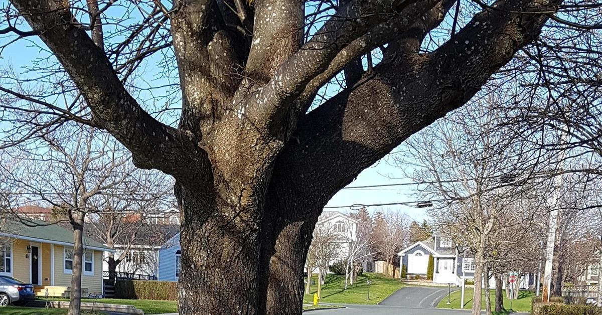 Секс с деревом видео рульная