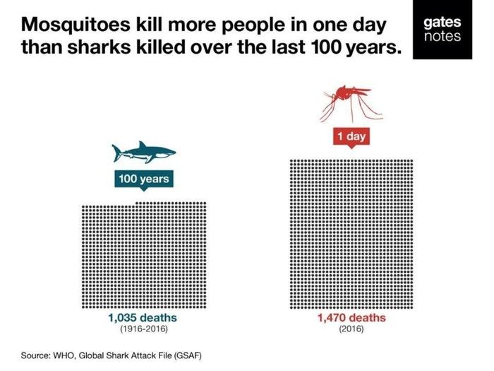 Комары за день убили больше людей, чем акулы за 100 лет. TJournal, Комары, Акула, Билл гейтс, Смерть