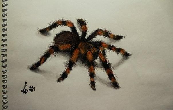 Павуки) Рисунок, Арт, Акварель, Паук, Карандаш, Лампочка, Паукообразные