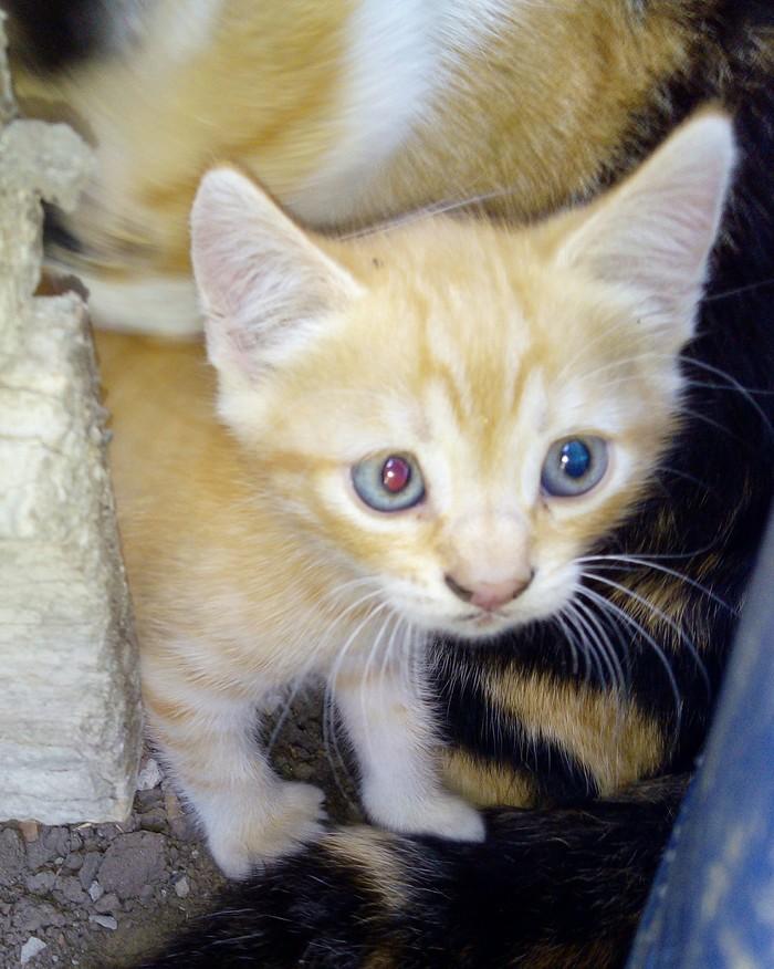 Котёнок ищет дом  Ростов на Дону Рыжий котяра, Отдам кошек, Кот, Котята, В добрые руки, Длиннопост