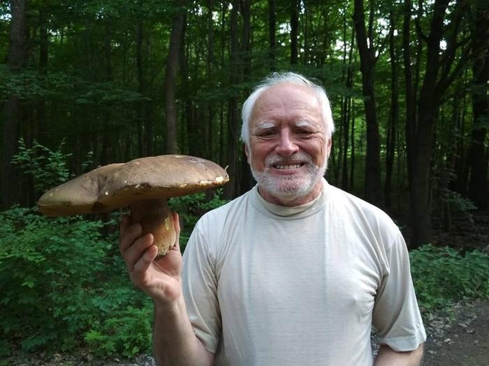 Твоё лицо,когда нашёл большой красивый гриб,а он оказался очень червивым.. Грибы, Тихая охота, Гарольд скрывающий боль, Арато Андраш