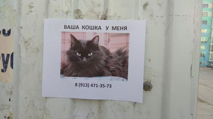 Заложник Кот, Фотография