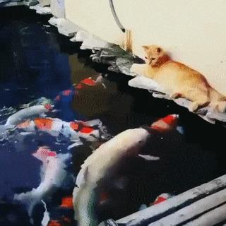Кошка vs рыба
