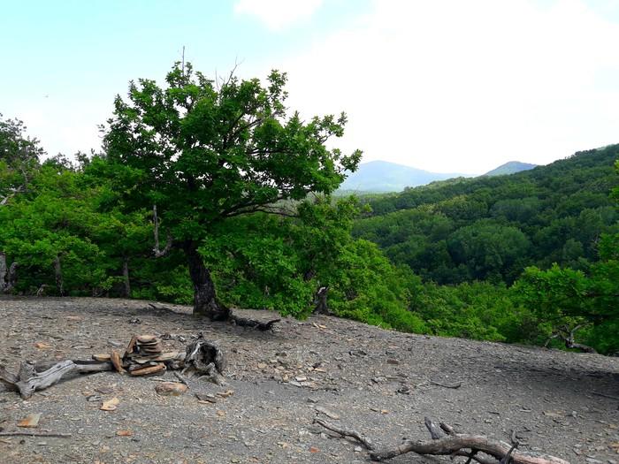 Грибы и немного леса. Лес, Прогулка, Грибы, Дерево, Фотография, Ущелье, Ручей, Ящерица, Длиннопост