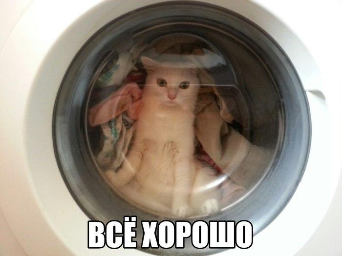 Когда учишься на другом конце страны. Кот, В стиральной машине, Добавьте кондиционер, На последнем полоскании, Добавьте ласки