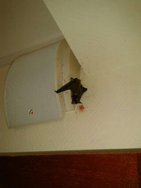 Вампир... летучая мышь, кровь, Животные
