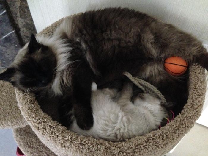 Как быстро растут дети... Кот, Братья и сестры, Старший брат, 11кг