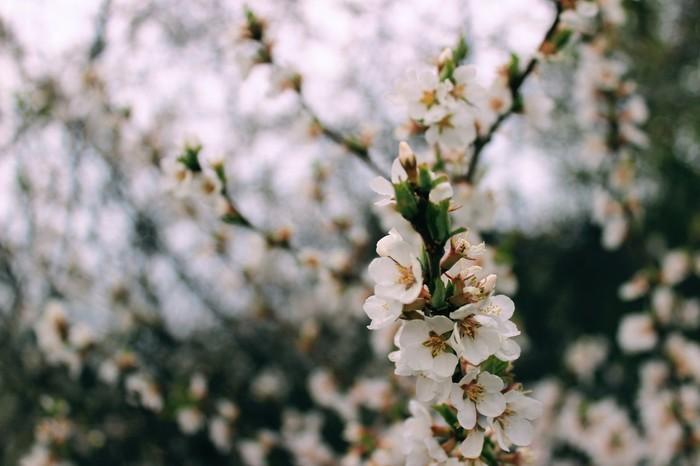 Нежность Нежность, Цветение, Красота, Фотография, Начинающий фотограф