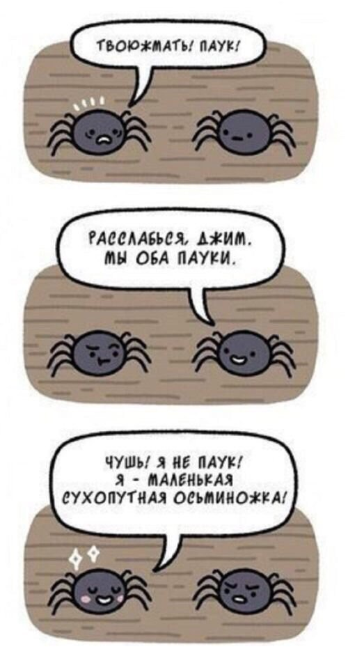 Из жизни паучков