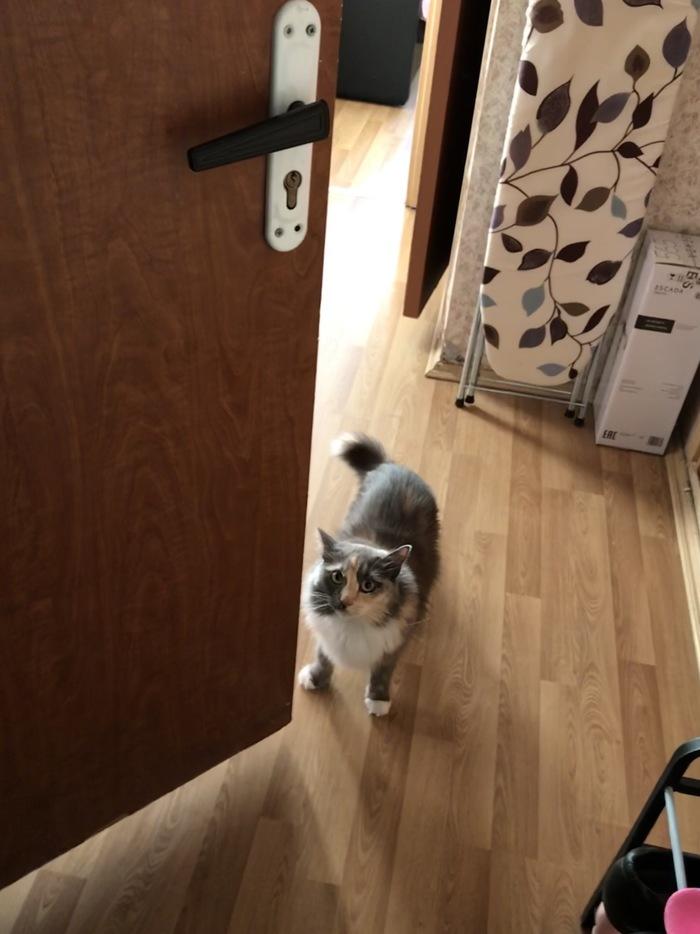 Кажется у кошки для меня есть плохая новость