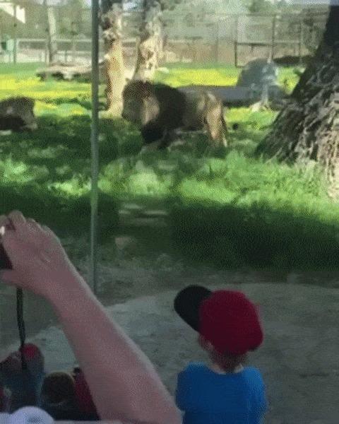 Как прошла ваша поездка в зоопарк?