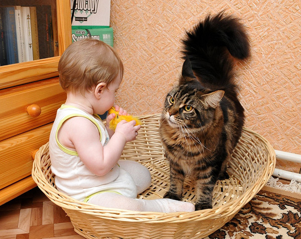 Ребёнок и домашнее животное) Папа, Эгоизм, Кот, Дети