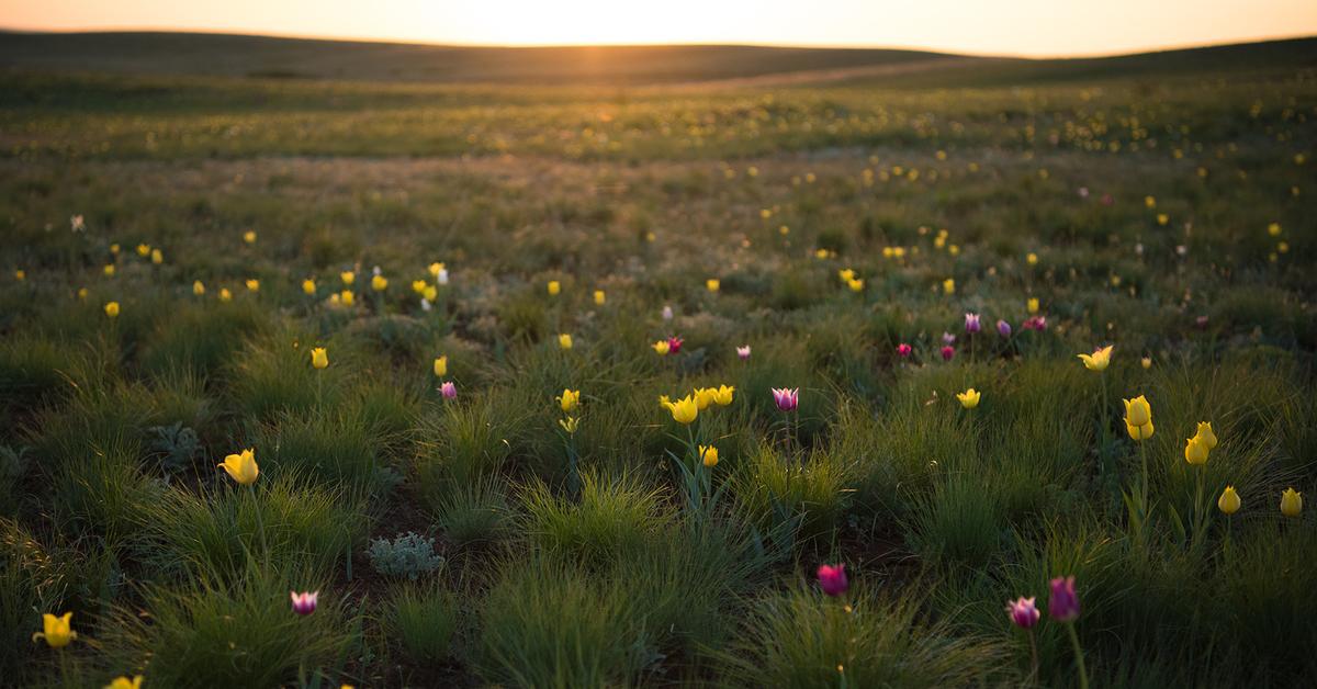вот весна в степи картинка числе удобств каждого